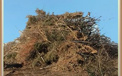How To Get Fined at the Yard Waste Site